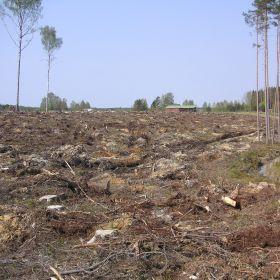 Jämijärven Pitkäniemellä